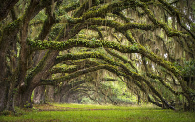 Charleston County Spending Millions on Conservation Plans